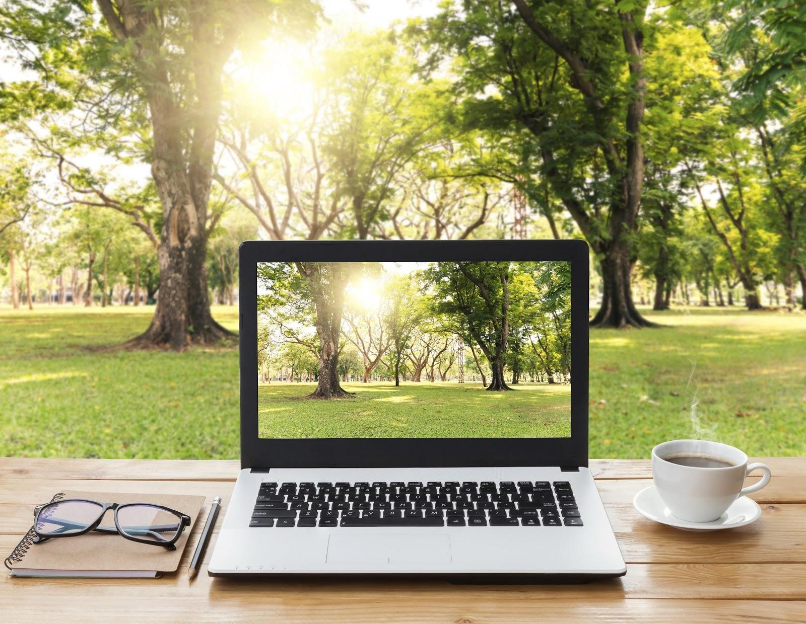 energy audit laptop in lush green environment